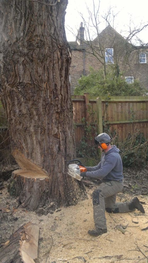 Tree Felling, Verwood, Dorset