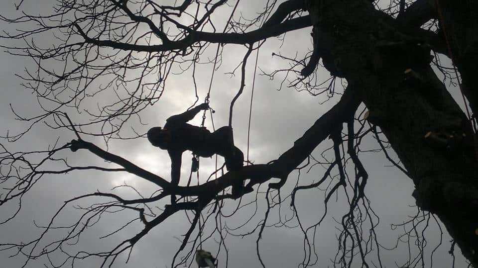 Tree Surgeon Dorset