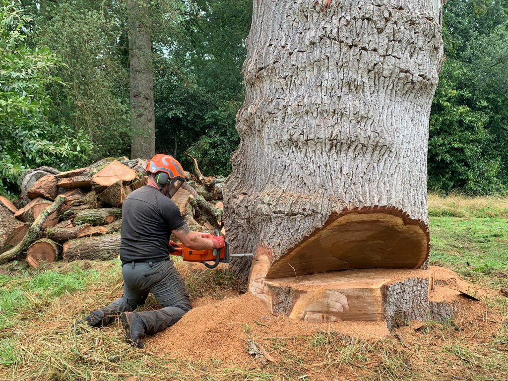 Tree Surgeon Verwood, Dorset